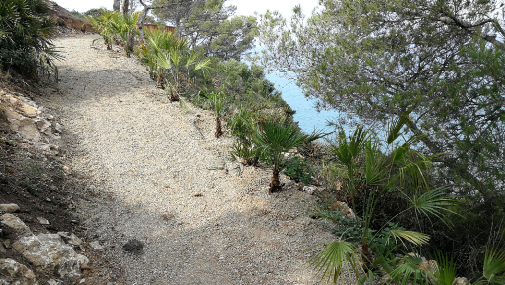 Chamaerops en Cap Salou